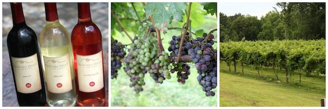 winegrapesvinesPicMonkey Collage